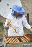Beekeeper near beehive. honeycombs. White clothes and hat Stock Photography
