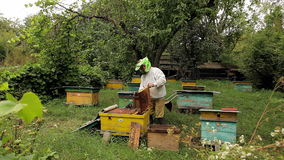 Beekeeper och bikupa stock video