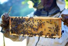 Beekeeper och bin Fotografering för Bildbyråer