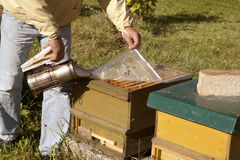 Beekeeper with open hive Stock Images