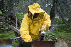 Beekeeper opened beehive Royalty Free Stock Photo