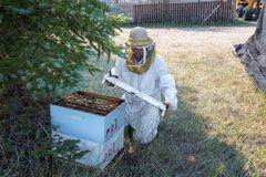 Beekeeper Opening a Hive. Of bees in Buffalo, Wyoming royalty free stock photo