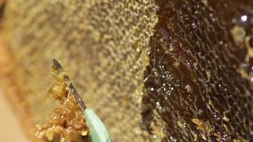 The beekeeper opens the honeycomb. Cleans the honey cell. Macro. Apiary. Bees. Slow motion. stock video footage