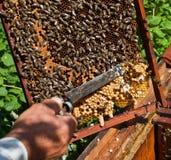 Beekeeper på arbete Royaltyfri Bild