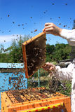 Beekeeper på arbete Arkivbilder
