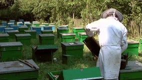 Beekeeper på arbete lager videofilmer