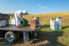 Beekeeper på arbete Royaltyfria Bilder