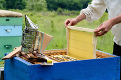 The beekeeper places the hive a new framework for honey. Honeycomb. Apiculture. Royalty Free Stock Photos