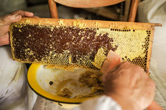 Beekeeper prepares honeycomb to extracting honey. Beekeeping. Beekeeper prepares honeycomb to extracting honey. Apiculture royalty free stock photos