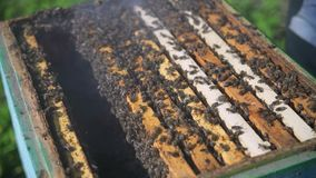 Beekeeper processes beehive chimney. Slow motion. stock video footage