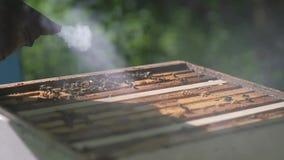 Beekeeper processes beehive chimney. Slow motion. stock footage