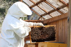 Beekeeper with protective clothing Royalty Free Stock Photo