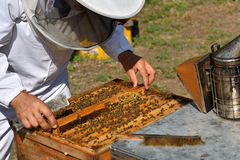 Beekeeper in a protective hat wearing on white shirt holding a f Royalty Free Stock Photography