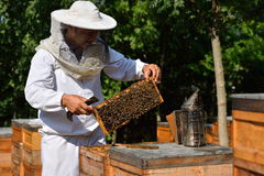 Beekeeper in a protective hat wearing on white shirt holding a f Stock Photography