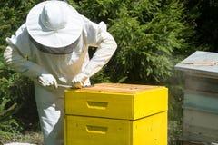 Beekeeper controlling beeyard and bees stock photos