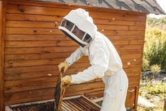 Beekeeper pulls out from the hive a wooden frame with honeycomb. Collect honey. Beekeeping concept.  royalty free stock photography
