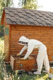 Beekeeper pulls out from the hive a wooden frame with honeycomb. Collect honey. Beekeeping concept.  stock photography
