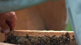 The beekeeper puts the honeycomb with bees in the hive. stock video footage