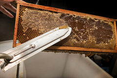 Beekeeper removed beeswax Stock Images