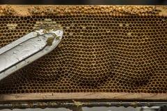 Beekeeper removed beeswax Stock Photo