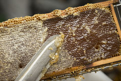 Beekeeper removed beeswax Stock Image
