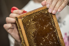 Beekeeper removed beeswax Royalty Free Stock Images