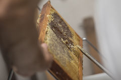 Beekeeper removed beeswax Royalty Free Stock Photography