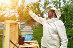 Beekeeper removes itself on the apiary Action Camera. Video Blog Stock Images