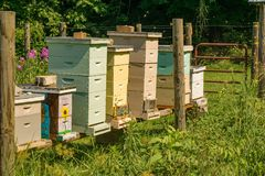 Beekeeper Secured Beehives. A beekeeper`s seven colorful stacked beehives located in a secure fenced area stock image