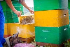 Beekeeper`s smoker in use at beekeeping. Beekeeper is using smoking pot to relax bees until he is taking out the honeycomb on wooden frame to control situation royalty free stock photos