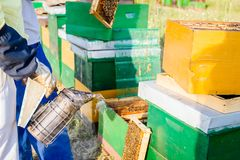 Beekeeper`s smoker in use at beekeeping. Beekeeper is using smoking pot to relax bees until he is taking out the honeycomb on wooden frame to control situation royalty free stock photography