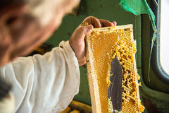 The beekeeper separates the wax from the honeycomb frame. royalty free stock photo