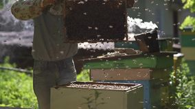 The beekeeper shakes the honey cell to clear it from the bees. The bees are flying. Slow motion stock footage