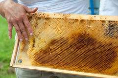 Beekeeper Showing Honeycomb Stock Photos
