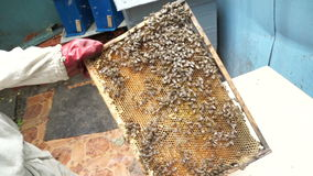 Beekeeper shows frame stock footage