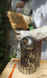 Beekeeper and smoker. Beekeeper in protective suit handling bees and collecting honey with a smoker royalty free stock photo