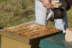 Beekeeper with smoker Stock Images