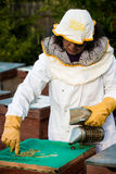 Beekeeper with smoker Royalty Free Stock Photo