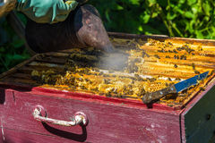 The beekeeper smokes the smoke of bees - drives away bees Royalty Free Stock Photos