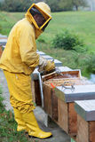 Beekeeper smoking a beehive Royalty Free Stock Photos
