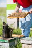 Beekeeper Smoking A Beehive Royalty Free Stock Image