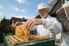 Beekeeper som att bry sig för bikoloni Arkivbilder