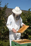 Beekeeper som att bry sig för bikoloni Arkivfoton