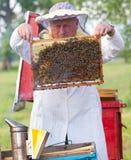 Beekeeper som fungerar i apiary Arkivbild