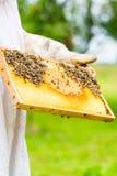 Beekeeper som kontrollerar beeyard och bin Fotografering för Bildbyråer