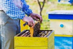 beekeeper som kontrollerar bikupan Royaltyfri Fotografi