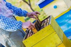 beekeeper som kontrollerar bikupan Royaltyfria Bilder