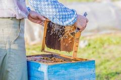 beekeeper som kontrollerar bikupan Arkivfoton