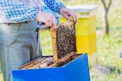 beekeeper som kontrollerar bikupan Arkivbilder