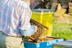 beekeeper som kontrollerar bikupan Arkivbild